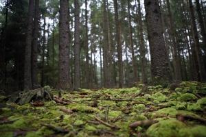 Šumavský národní park bývá označován jako Zelené srdce Evropy.